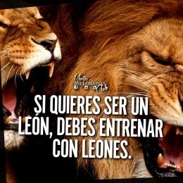Si quieres ser un león, debes entrenar con leones