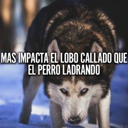 Más impacta el lobo callado que el perro ladrando