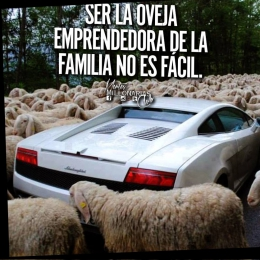 Ser la oveja emprendedora de la familia no es fácil