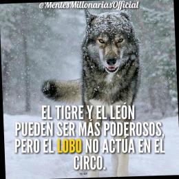 El tigre y el león pueden ser más poderosos pero el lobo no actúa en el circo