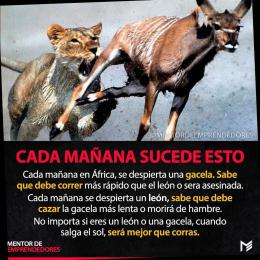 El León y La Gacela cada mañana