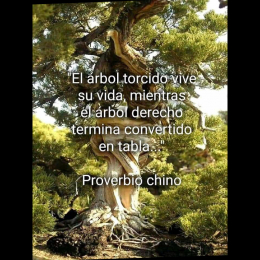 El árbol torcido vive su vida mientras el árbol derecho termina convertido en tabla