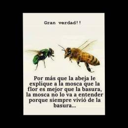 Por más que la abeja le explique a la mosca que la flor es mejor que la basura la mosca no lo va a entender porque siempre vivió de la basura copia