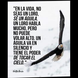 En la vida, no seas un loro, sé un águila un loro habla mucho, pero no puede volar alto. Un águila va en silencio y tiene el poder de tocar el cielo