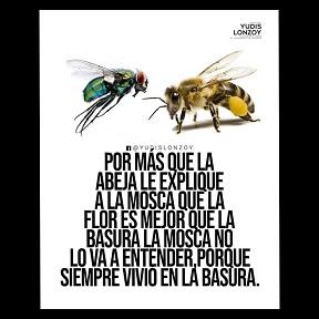 Por más que la abeja lo explique, la mosca no lo va entender