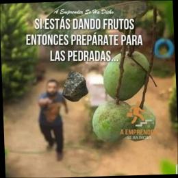 Si estás dando frutos entonces prepárate para las pedradas