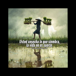 Usted cosecha lo que siembra la vida no es suerte