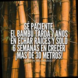 Se paciente el bambu tarde 7 años en echar raices y solo 6 semanas en crecer más de 30 metros