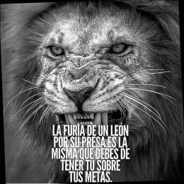 La furia de un león por su presa es la misma que debes de tener tú sobre tus metas